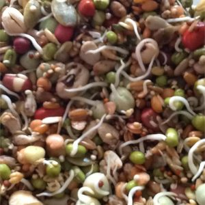 NM Sprout Mix 5 lb.