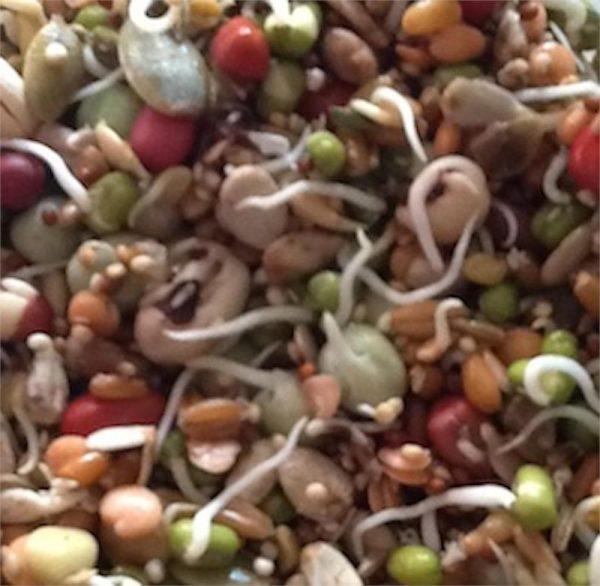 New Millennium Sprout Mix